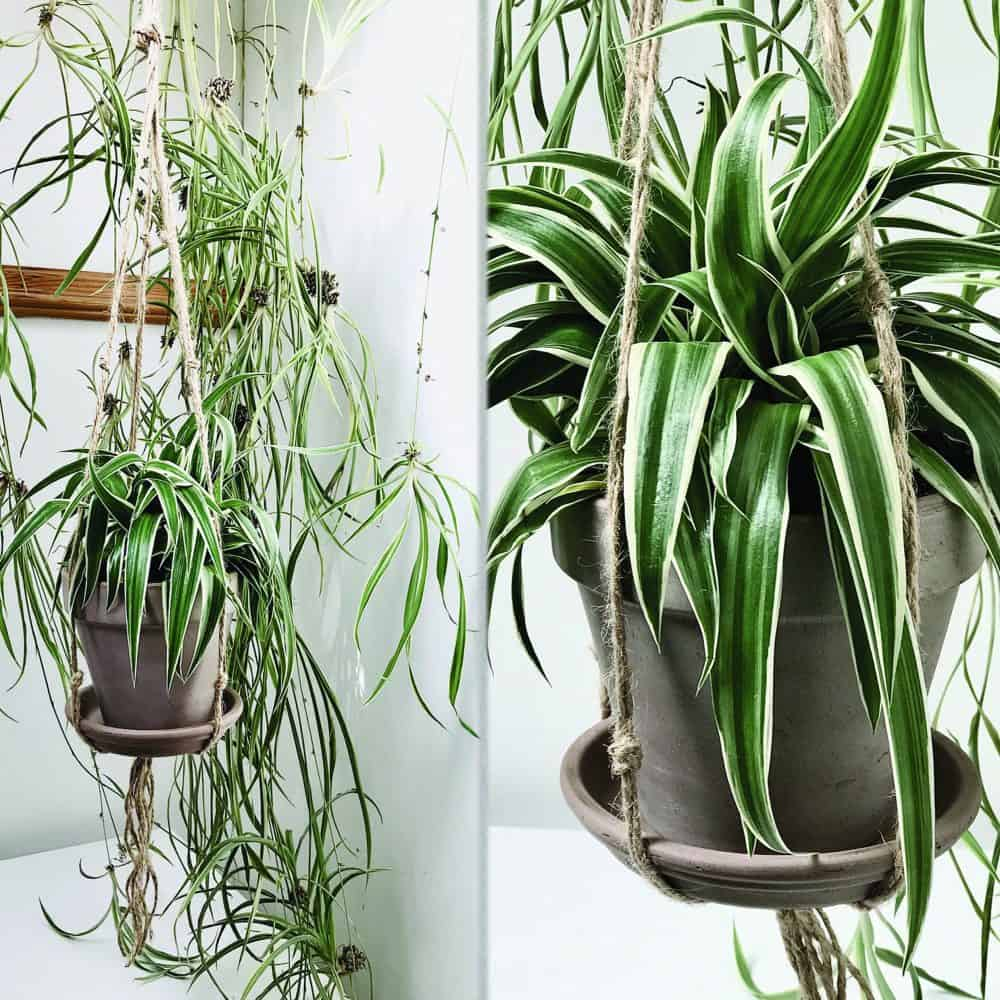 Jute Pot Holder Concrete Wall Eco Friendly Products